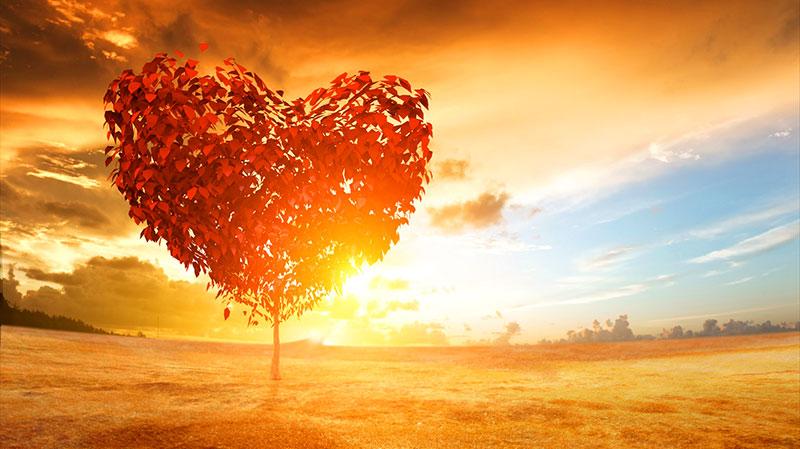 10 síntomas que avisan de un ataque al corazón. gCardio es Distribuidor Oficial para España de la marca Zoll. Visita nuestra tienda Online. 900 902 577