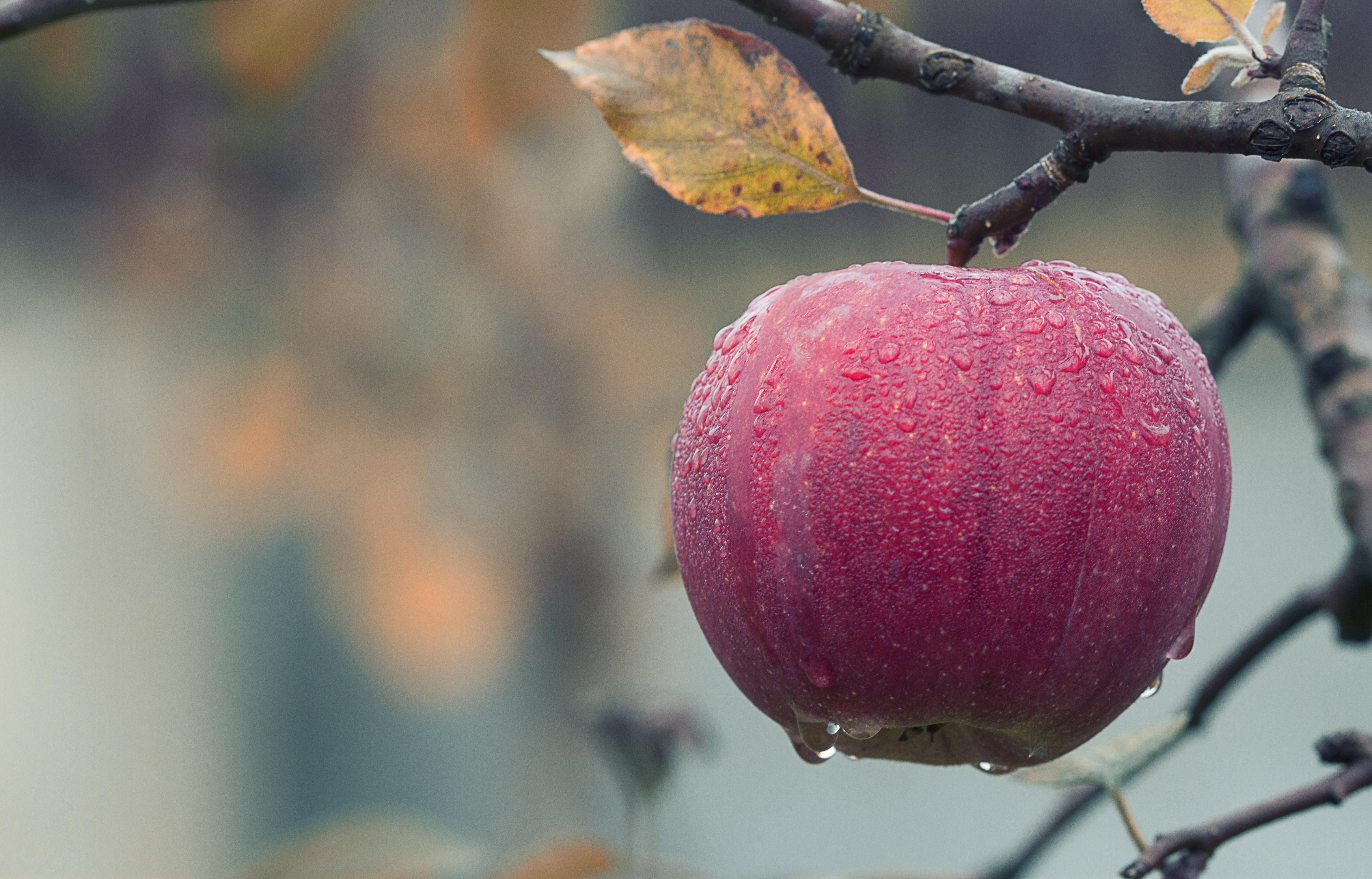 Fruta en un árbol